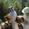 Be a Beekeeper for a day - 2 Nights
